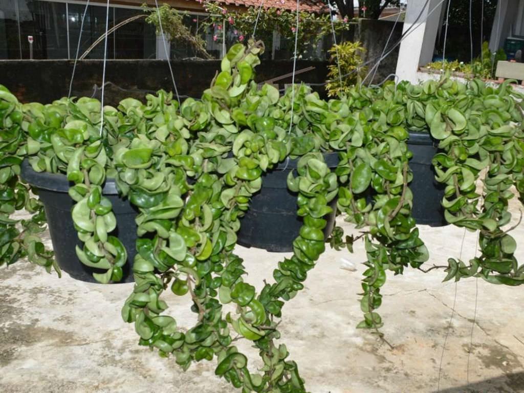 plants succulent