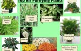 plants-to-clean-air