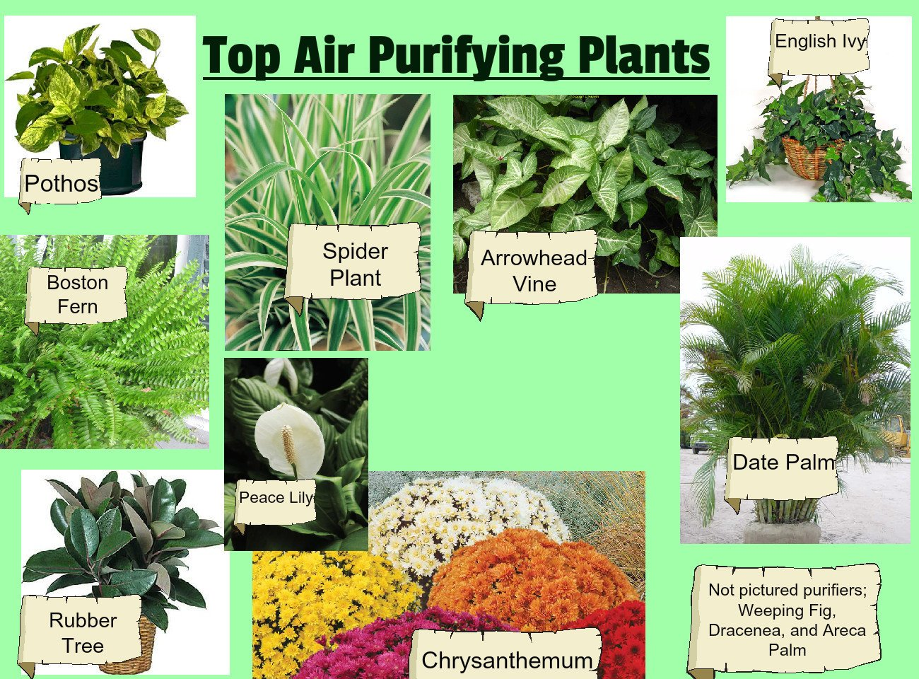 plants to clean air