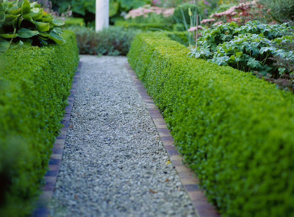 plants to make a hedge