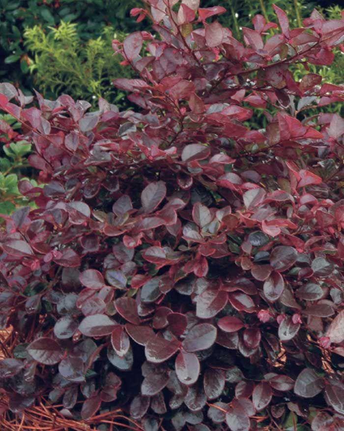 plants zone 8