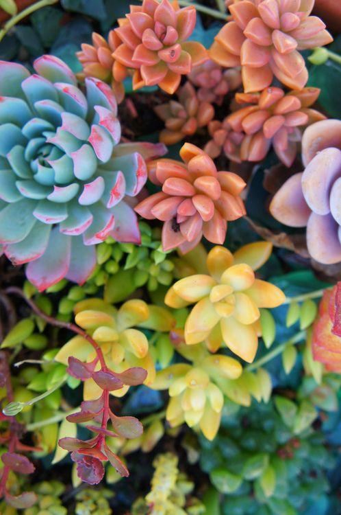 secret succulents