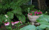 shade-garden