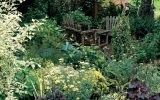 shade-loving-hedges