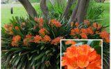 shade-loving-plants