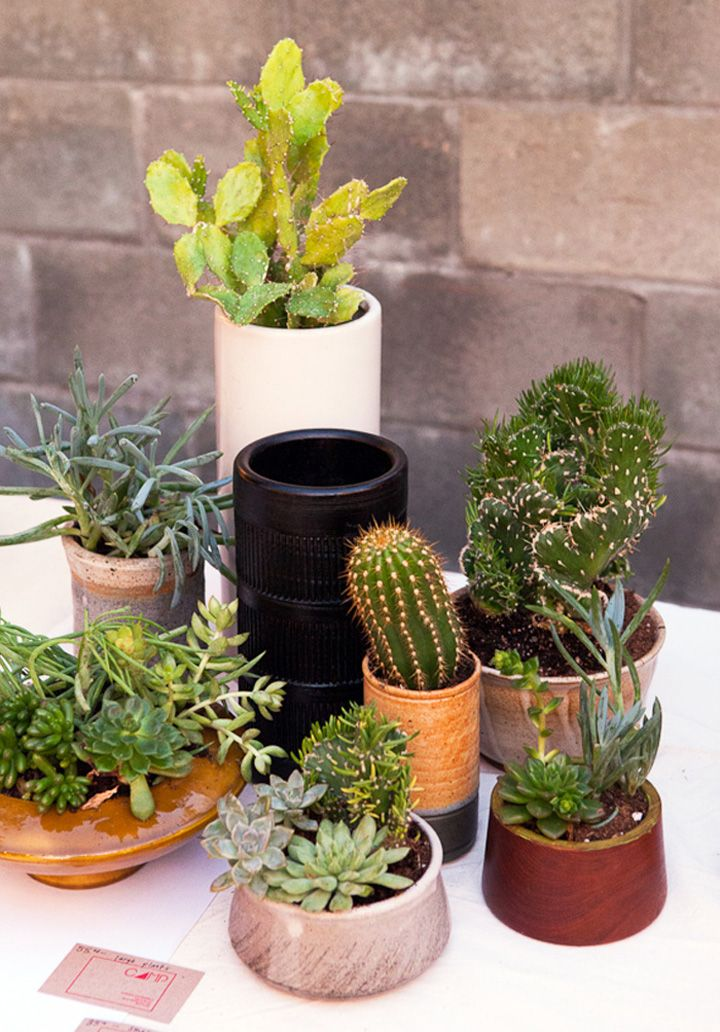 small cactus plants for indoors