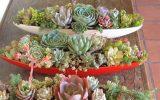 small-cactus-succulent