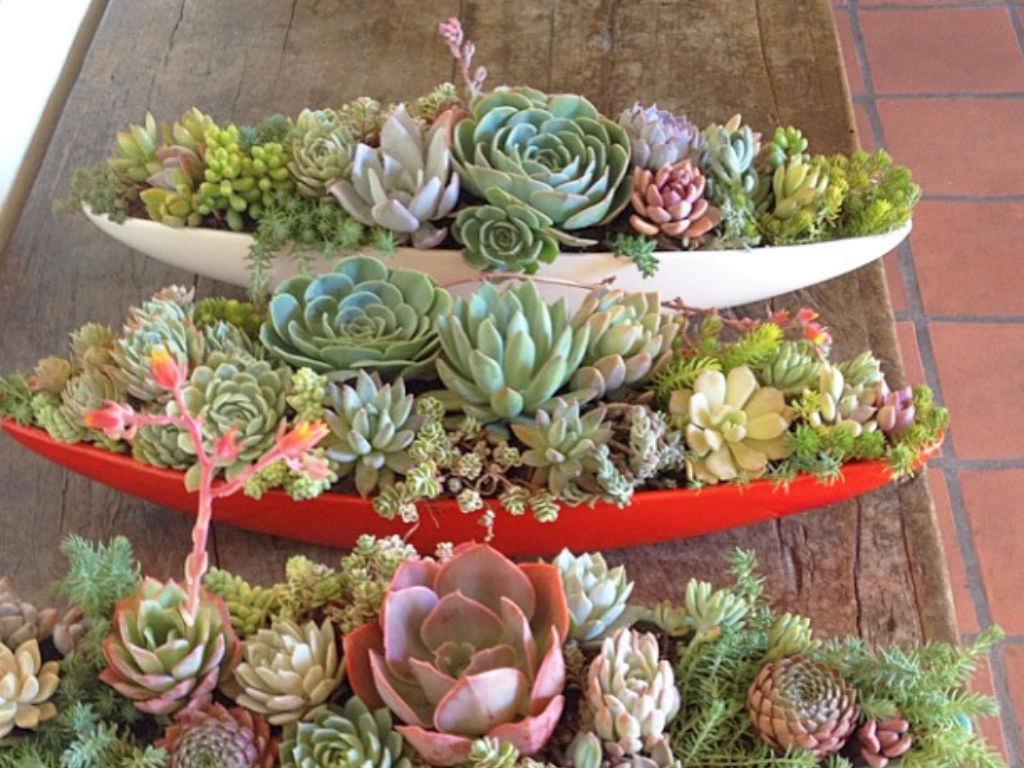 small cactus succulent