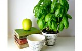 small-plant-for-home