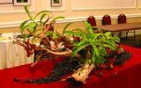 succubus-plants