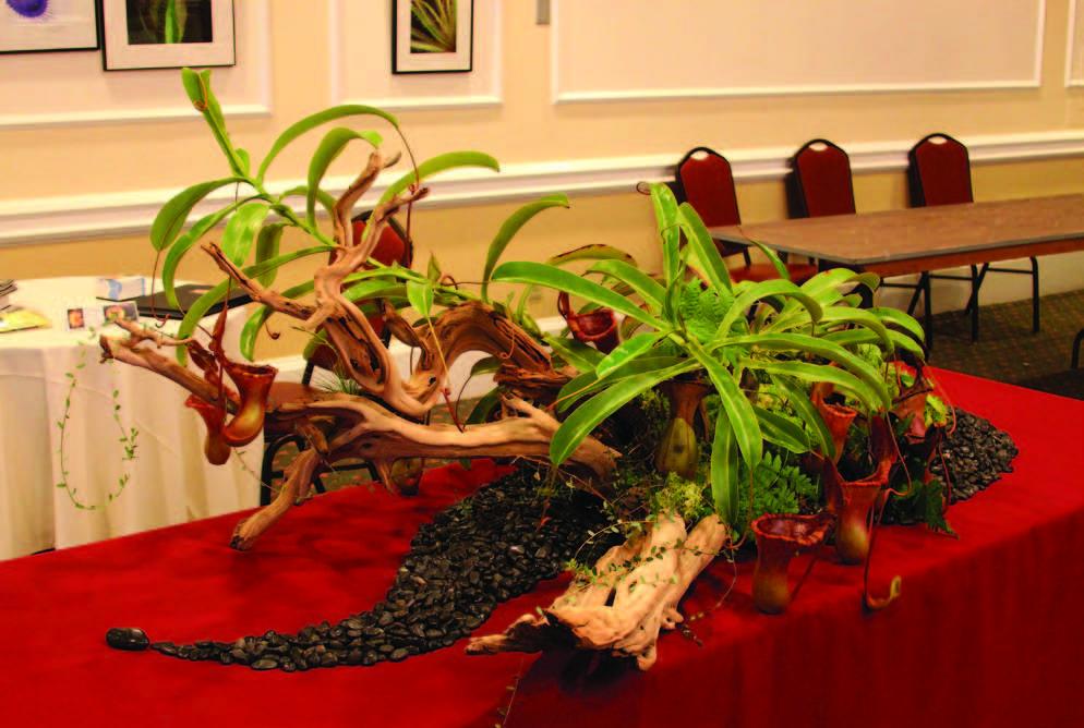 succubus plants
