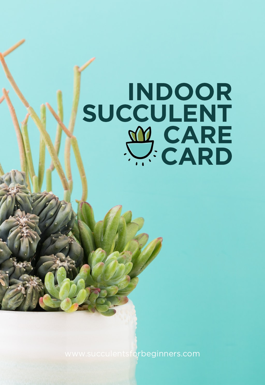 succulent care tags