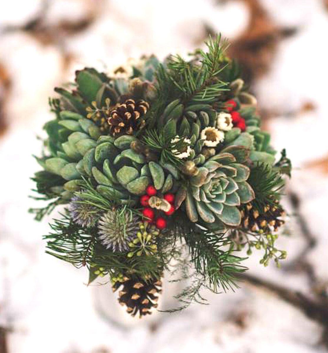 succulent in winter