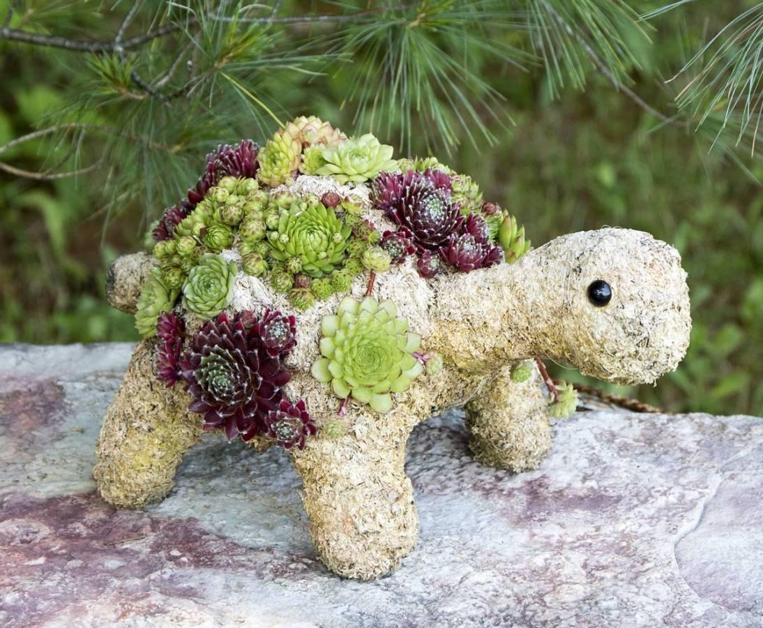succulent kinds