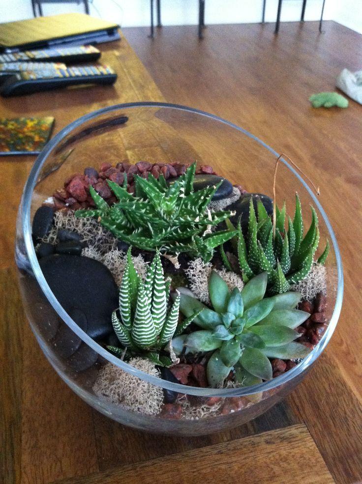 succulent mini cactus