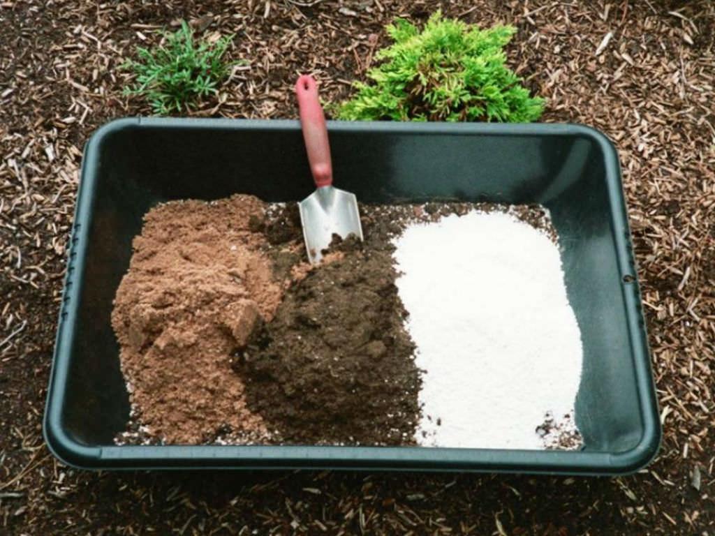 succulent plant soil