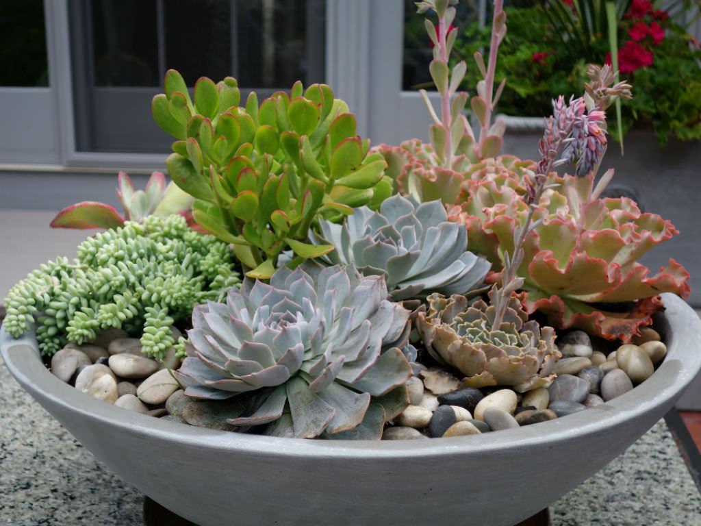 succulent plant succulent flowers