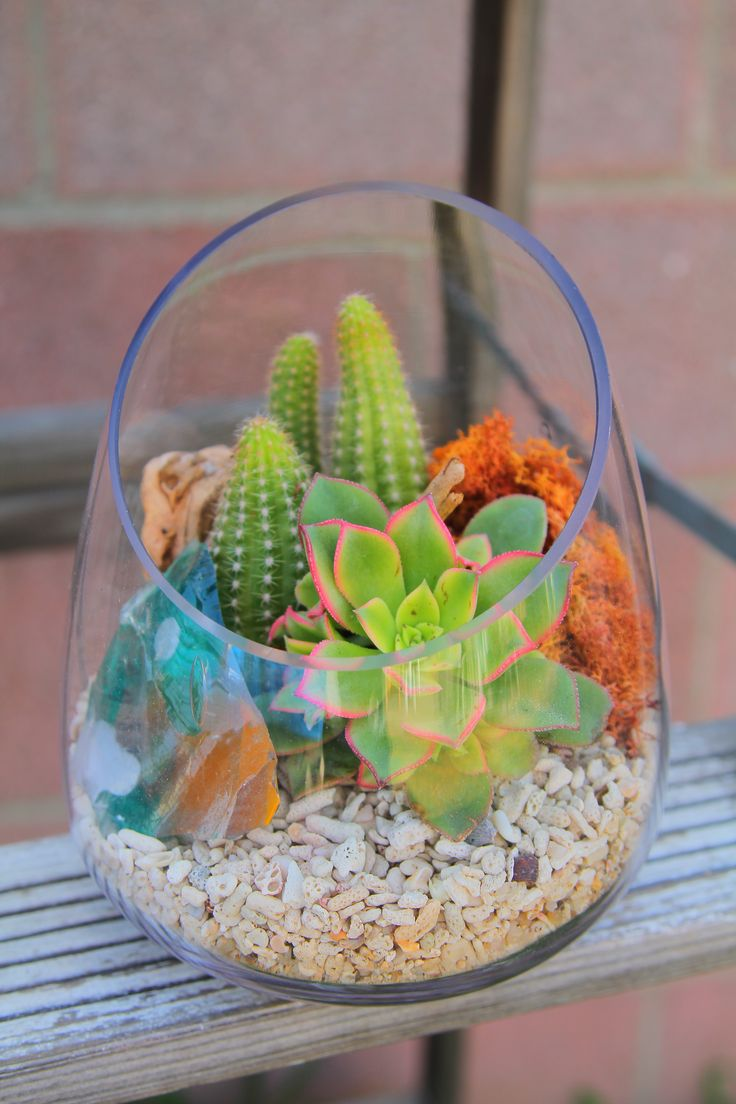 succulent plants mini