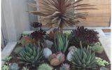 succulent-plants-outdoors