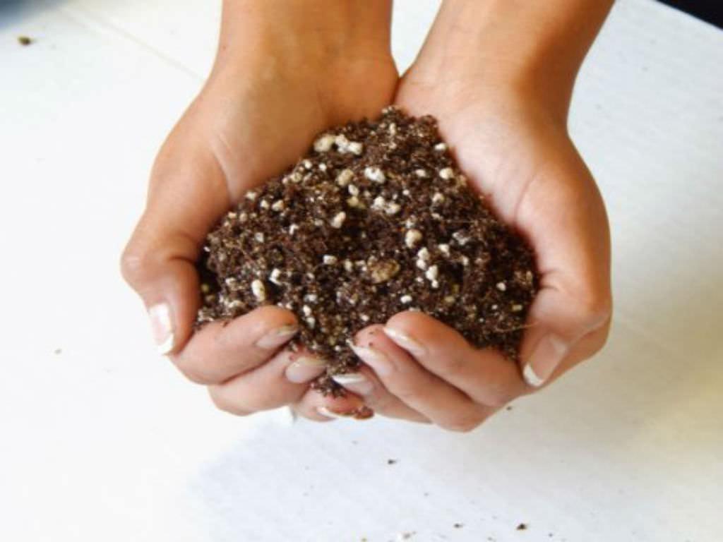 succulents fertilizer