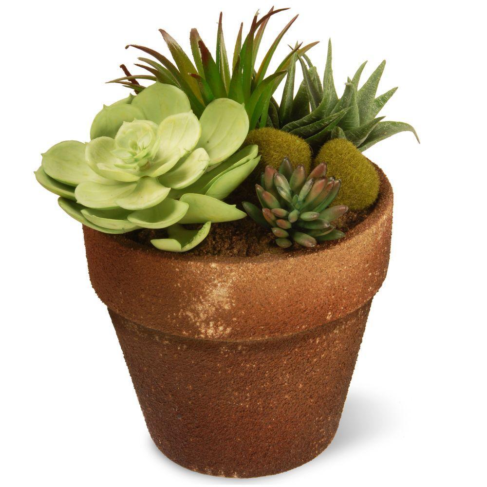 succulents house plants