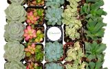 succulents-in-house