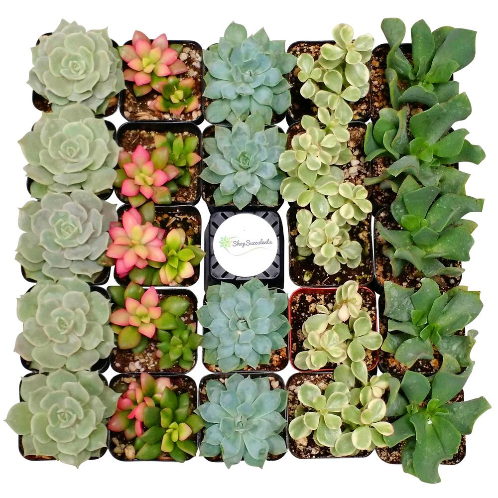 succulents in house