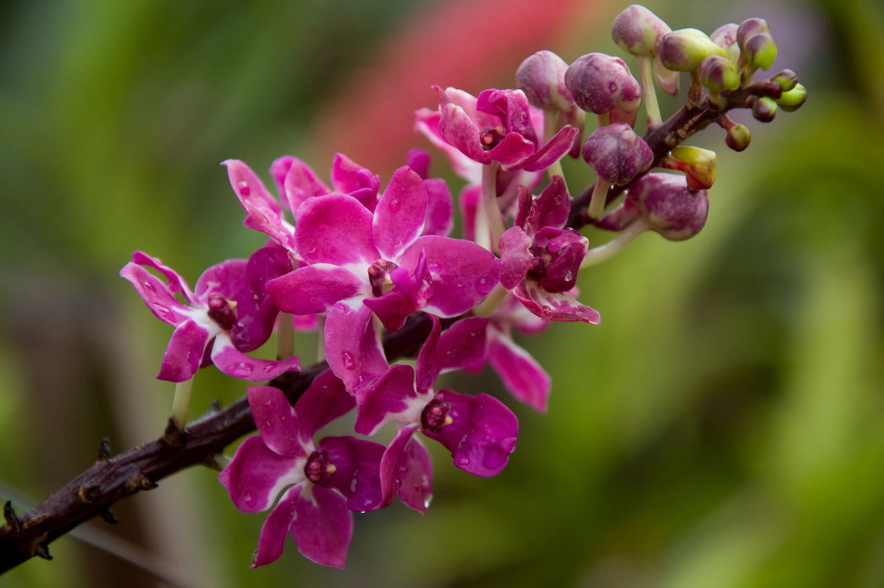 take care of orchids