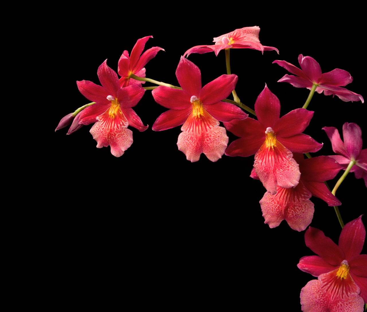 taking care of orchids