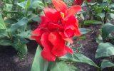 tall-flower-plant