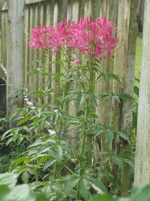 tall shade loving plants