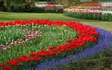 the-flowers-garden