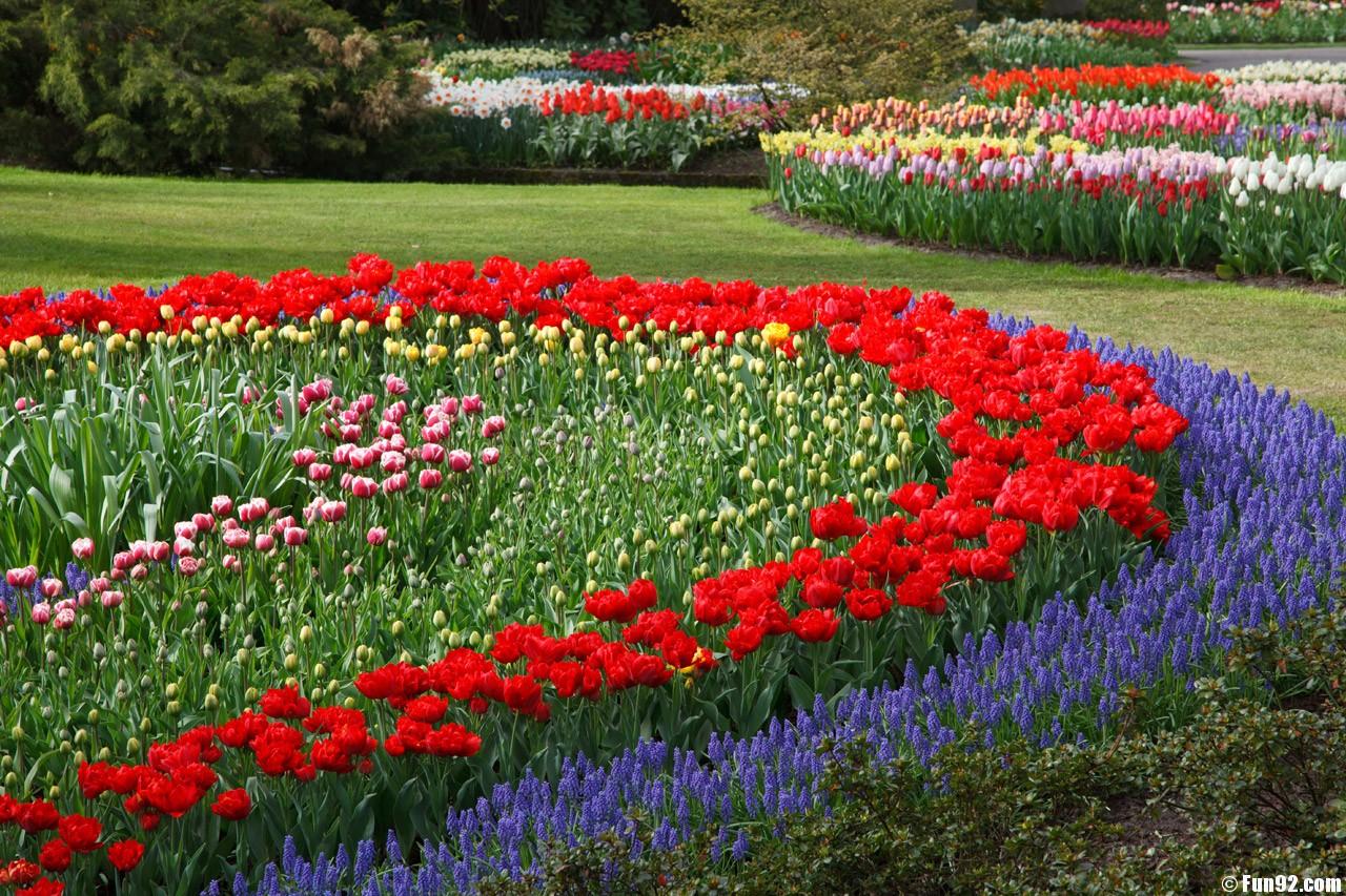 the flowers garden