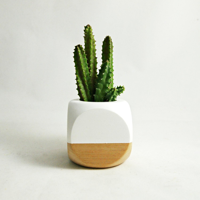tiny cactus plant