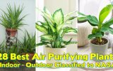 what-indoor-plants-clean-the-air