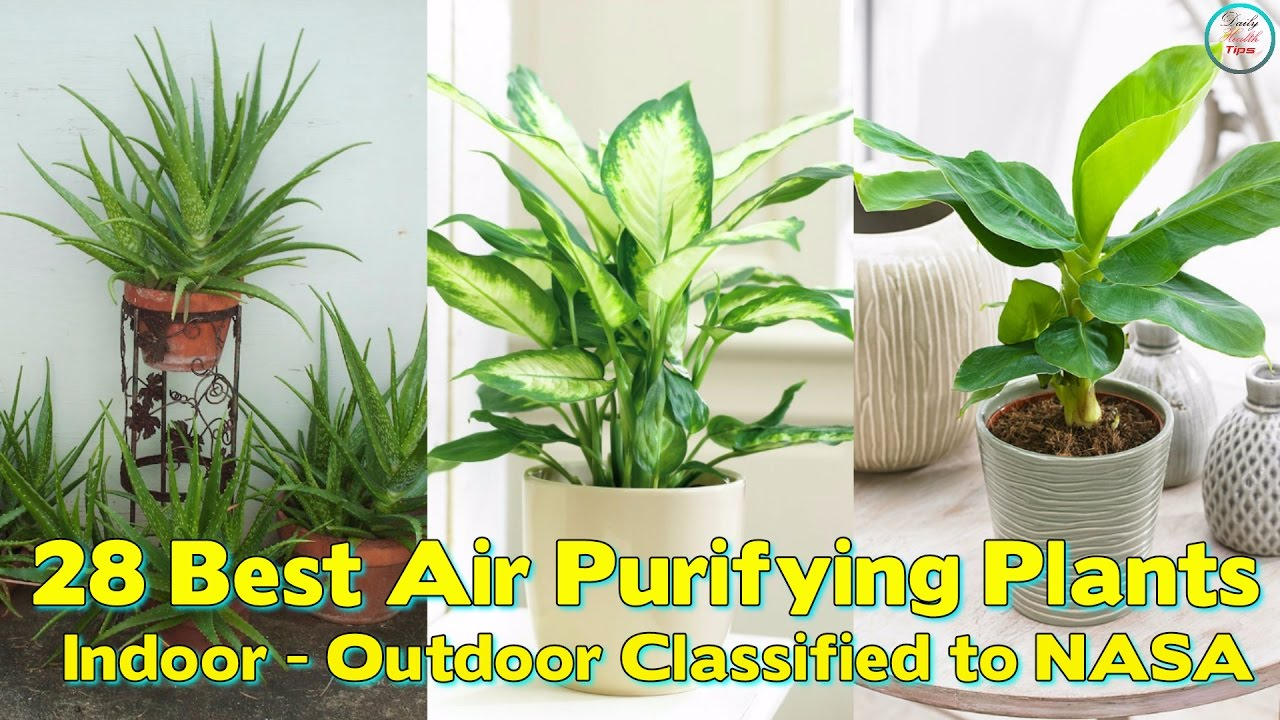 what indoor plants clean the air