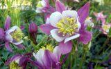 winter-blooming-flowers