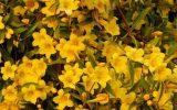 winter-flowering-outdoor-plants