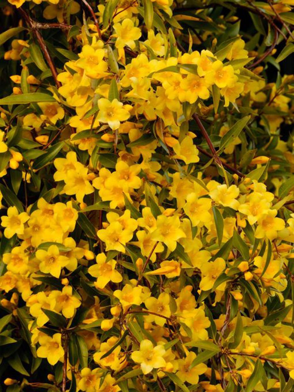 winter flowering outdoor plants