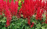 winter-flowering-perennials