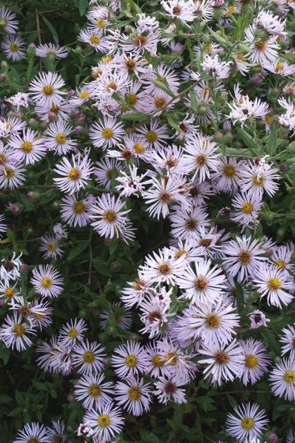 winter flowers florida