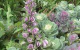 winter-flowers-for-garden