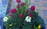 winter-flowers-in-arizona