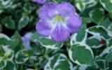 winter-flowers-in-florida