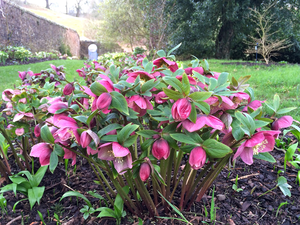 winter flowers to plant