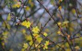 winter-plants