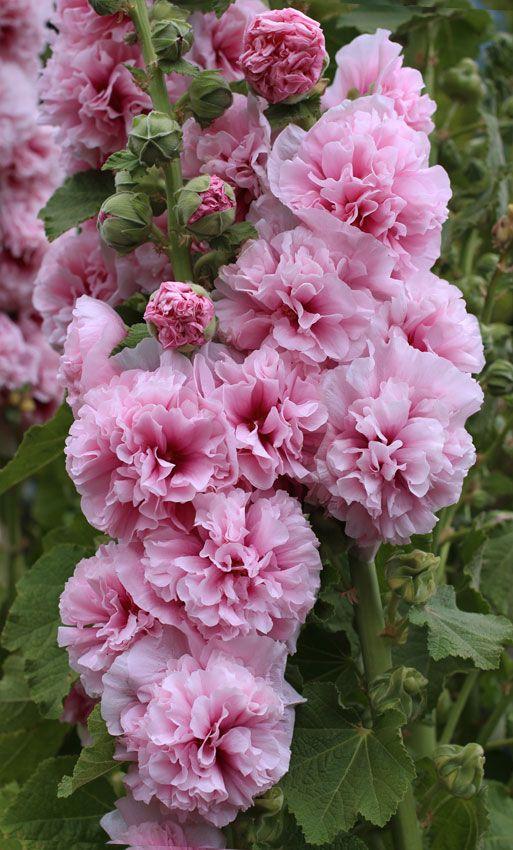 zone 6 flowers