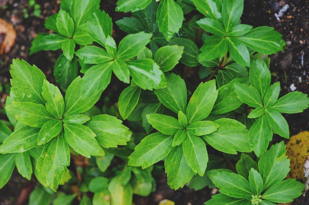 zone 8 plants