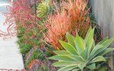 zone-9-plants
