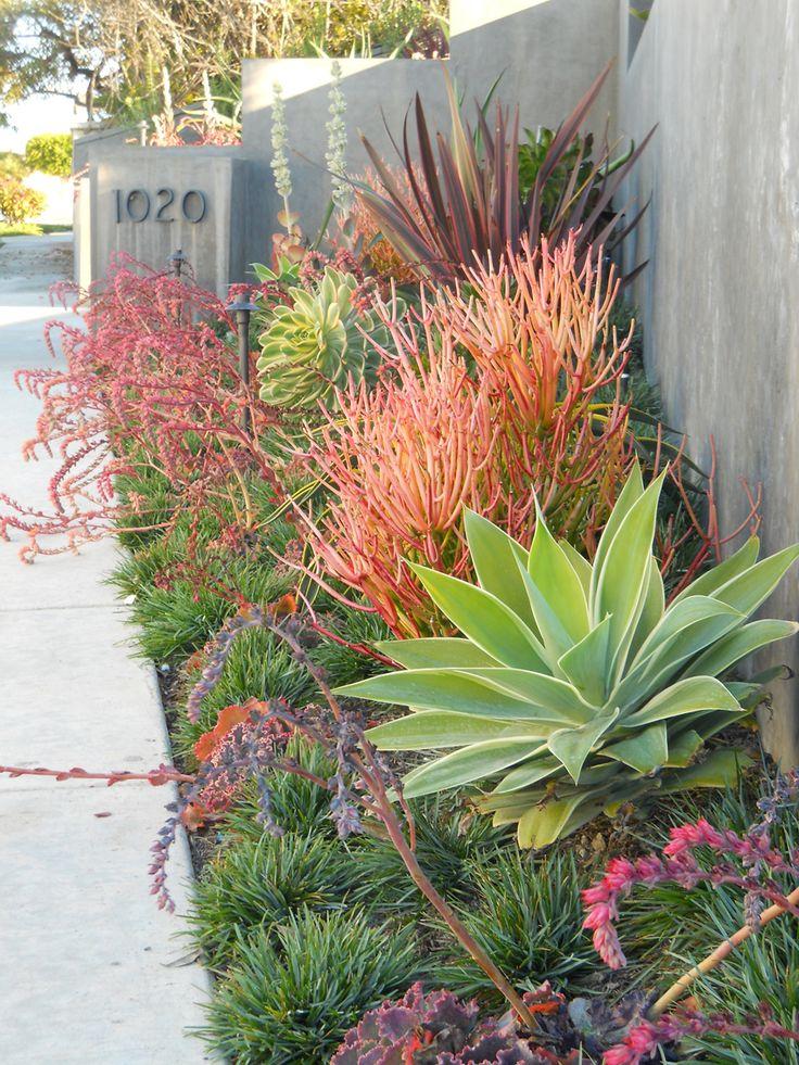 zone 9 plants